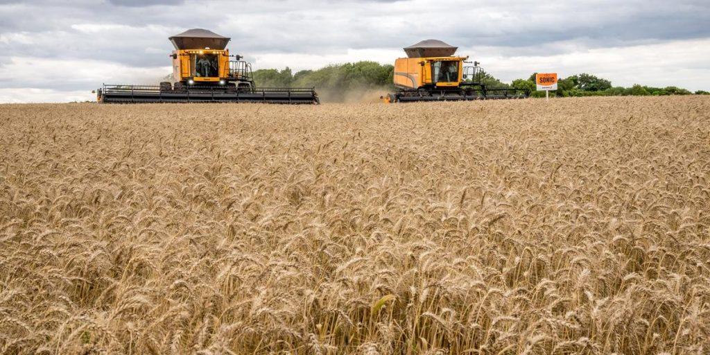 Estimativa boa para a safra 2020 do trigo brasileiro - Revista ...